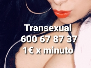 Transexual webcam